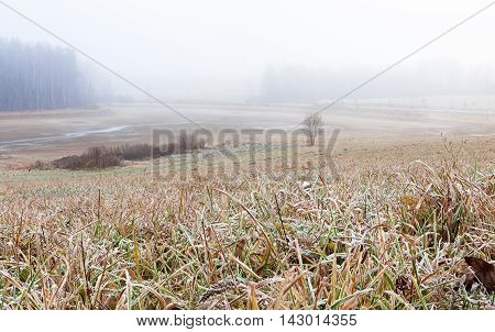 Lowland with dried pond grass covered with hoar frost on foreground