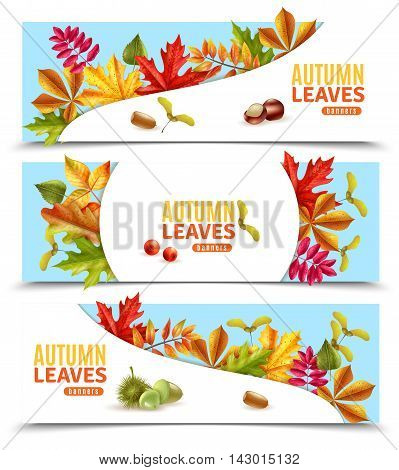 Horizontal flat banners with autumn leaves chestnuts berries and acorns isolated on white background vector illustration