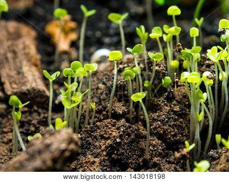 Seedlings seedlings of flowers. Were germinated in pots