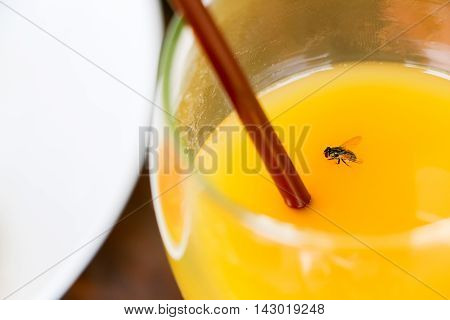 close up fly in orange juice glass