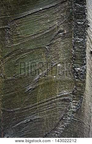 Wet beech bark showing ripples scars and lumps