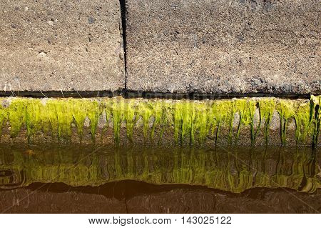 water level decline. green slime and its reflection in water. the concept of lowering the water level