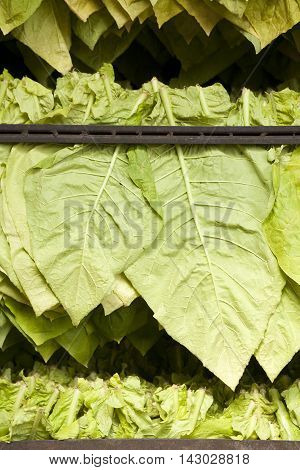 Tobacco Leaf Traditional Dryer