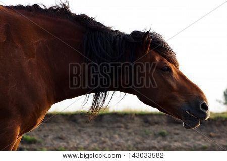 Portrait Of Rustic Horse
