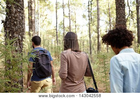 Three Friends Strolling In A Pine Plantation