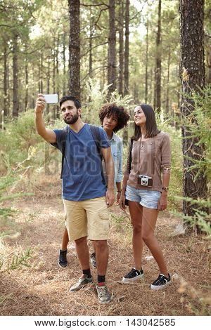 Three Friends Taking Pine Forest Selfies