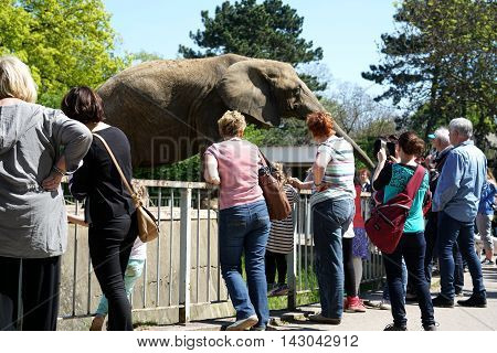 MAGDEBURG, GERMANY - MAY 05, 2016: Visitors at the elephant in Magdeburg Zoo
