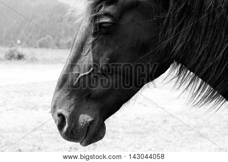 Dramatic portrait of horse in black and white