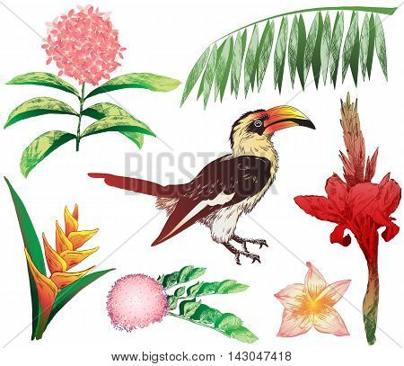 Colorful Tropical Elements For Your Design (jungle Plants And Toucan)