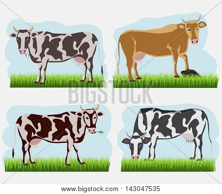 Set of cow, flat icons. Vector cows of different colors