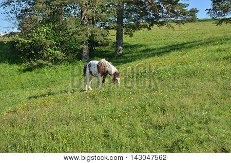 Grazing Horse On Green Field