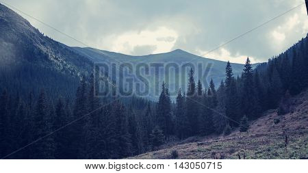 Mountains in cloudy day and spruce forest dark filter