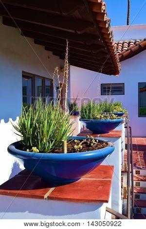 Plants in colorful contemporary pots on Spanish tile taken at a hacienda villa