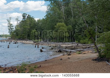 A deserted and abandoned beach with dead trees in the water surrounded by woods under a blue sky