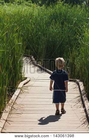 A child walking alone down a path between tall vegetation.