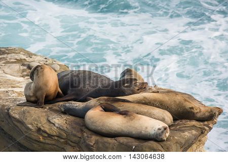A group of sleeping sea lions on a cliff by the ocean during sunset in La Jolla cove, California