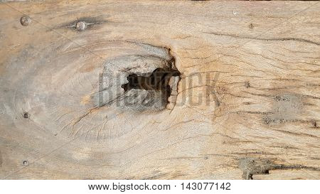 old wood with nails and gnarl. background
