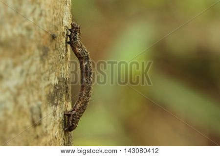 Close-up profile photograph of a well-camoflauged larval butterfly.