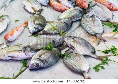 Fresh fish for sale at a market in Palermo, Sicily