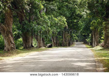 Road in forest in daytime with nobody. Zanzibar Africa
