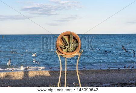 ceramic vase with agave plant, background beach with the blue sea with seagulls in flight , front view, natural light of the evening