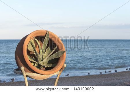 ceramic vase with agave plant, background beach with the blue sea with seagulls, front view, natural light of the evening