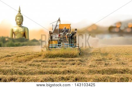 Unidentified man with Harvester machine to harvest rice field and buddha in background