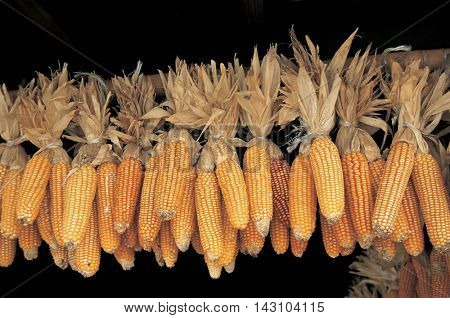 Drying corn in the eaves