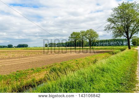 Colorful Dutch rural polder landscape in the summer season. On the field are rows of drying onions until they are mechanically picked up for further transport.