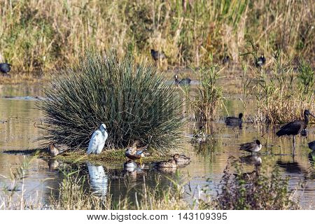 Dense thickets of grass. Hula Nature Reserve, Israel, December. Various types of water birds wintering at Lake Hula