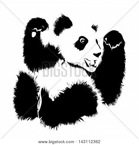 Vector isolated image of a panda on a white background
