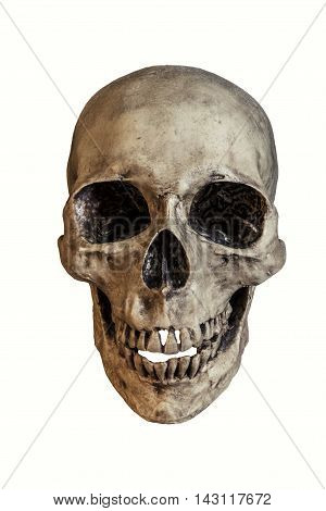 Human skull with dusty isolated on white background