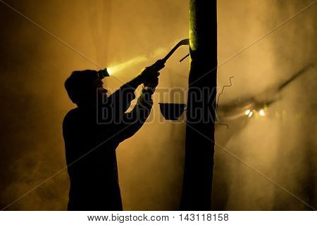 People working apping Rubber Tree at Night asia