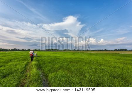 Farmers are out in the field of fertilizers beautiful sky.