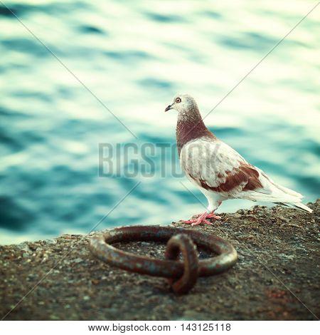 Greek dove on the promenade in Crete impressions of Greece