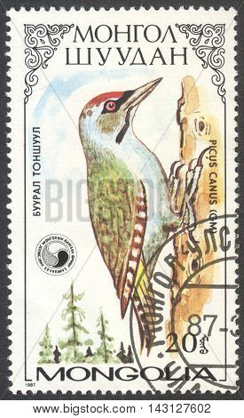 MOSCOW RUSSIA - CIRCA MAY 2016: a post stamp printed in MONGOLIA shows a Picus canus bird the series
