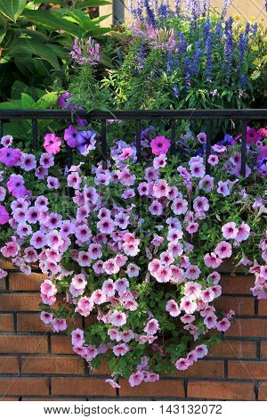 Old brick wall with array of gorgeous flowers spilling over the side of it.