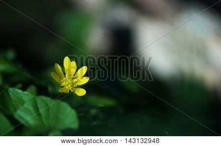 A background photo with blurred yellow flower and leaves on the side in foreground and and blurred deep green and white colors in the background