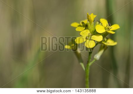 Yellow Flowers On A Background Of Green Grass On A Sunny Day