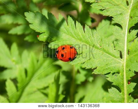 Ladybug on plant leaf during sunny day