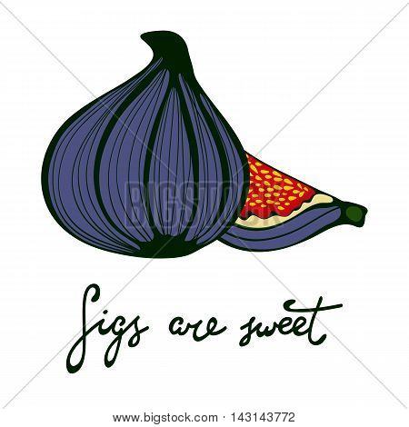 Figs are sweet. Hand drawn figs. Eco food. Vector illustration