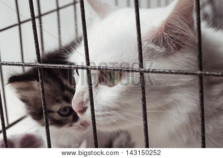 eye of mom cat in cage vintage tone