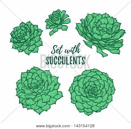 Hand Drawn Vector Illustrations - Set With Succulents. Sketch On White Background. Perfect For Weddi