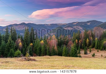 Autumn landscape with the forest. Cloudy morning in the mountains. Dry grass on the meadow. Carpathians, Ukraine, Europe