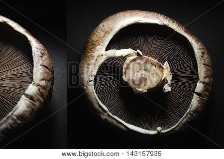 Portobello mushroom with a detail on black background.