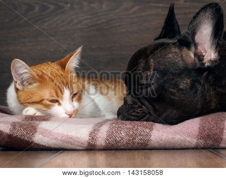 Cat and dog sleeping together. Snouts animals near