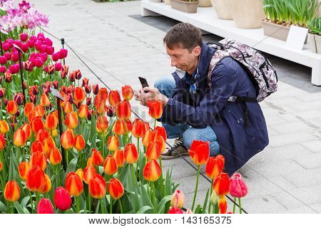 Lisse, Netherlands - April 4, 2016: Man making photo of colorful tulips blossom in pavillion of dutch spring garden Keukenhof, Lisse, Netherlands