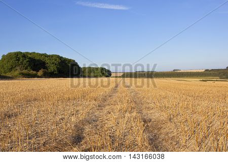 Woodlands And Canola Stubble