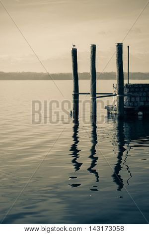 Three dock pilings in a calm lake with reflections in the water one seagull romantic scene b&w conversion.