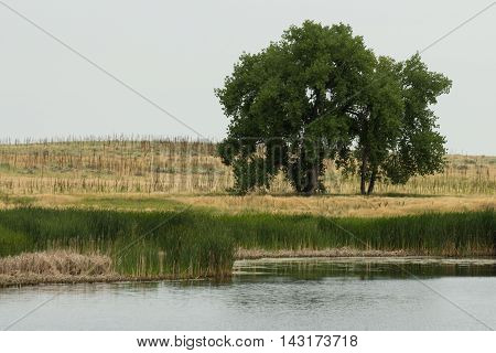 A lonely tree on the shore of a pond on the plains.
